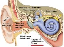 среднее ухо 3