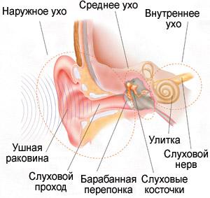 Устройство наружного уха