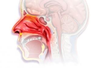 Симптомы острого ринофарингита